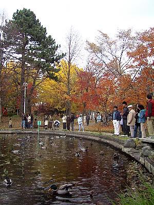 北海道大学|大野池|ひょうたん池|写真