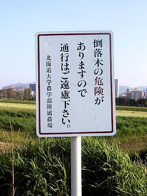 札幌|北海道大学ポプラ並木