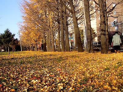 札幌|中島公園|写真