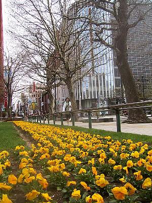 札幌|大通公園