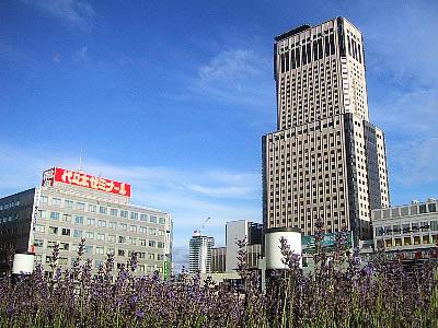 札幌駅北口|ラベンダー