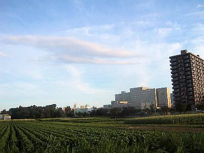 北海道大学|北大第一農場