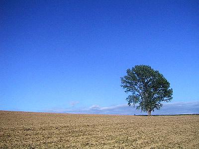 美瑛|哲学の木|写真