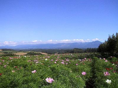 美瑛|四季彩の丘|写真