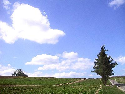 美瑛|マイルドセブンの丘|写真