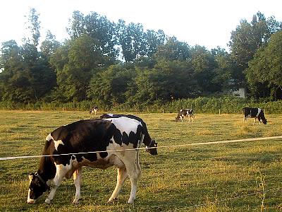北大第一農場|写真