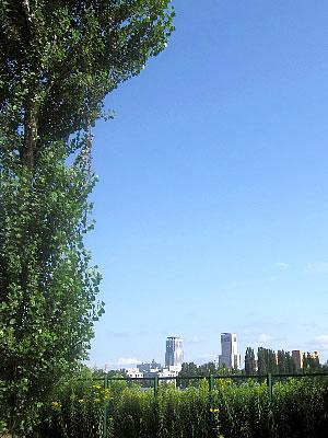 北海道大学|平成ポプラ並木|写真